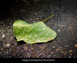 rain pic 2